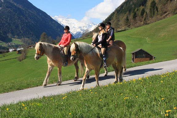 Ride horses, Omesberger Hof in Neustift – a holiday in the Stubai Valley in Tyrol